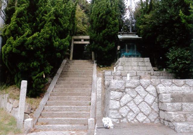 島の神社はよく手入れされている