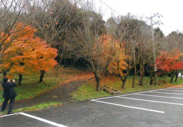 駐車場周辺の紅葉がすばらしい(12月14日)