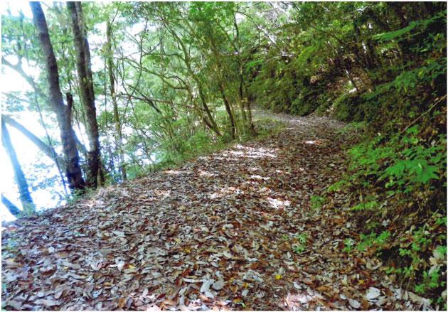 温見ダム ボーイスカウト野営場へ行く道