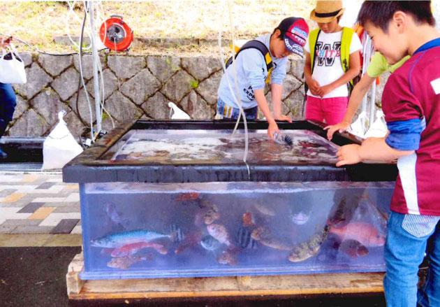 水槽の活魚