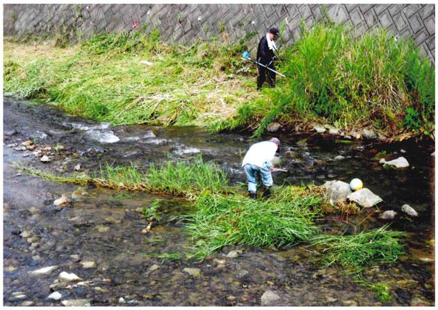 川の中にも草が
