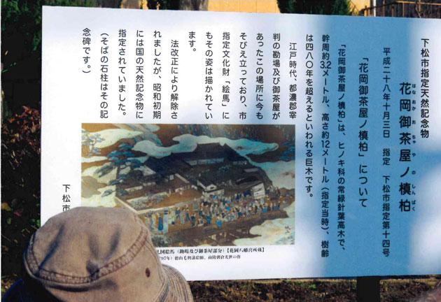 槙柏の木の説明板(下松市指定の樹木)