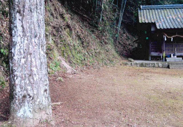 樹齢100年を超えた銀杏の幹