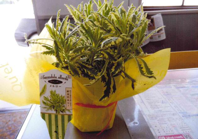 出席者全員に配られた花鉢出席者全員に配られた花鉢