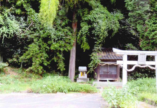 神社左横の檜の大木