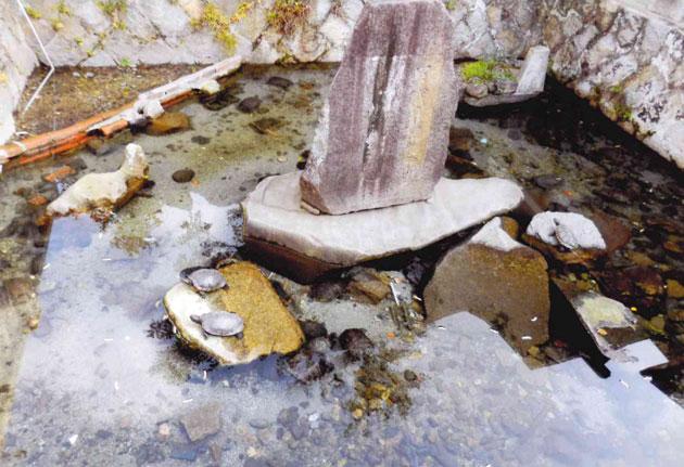 きれいになった亀池