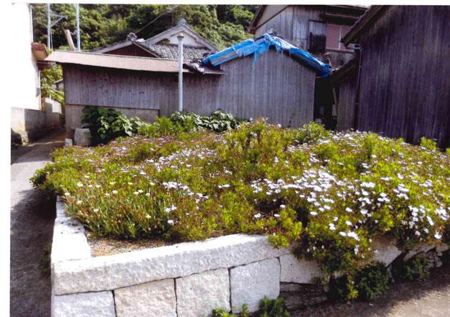 集落の空き地には花が咲いている