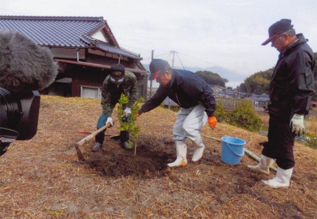 2年もの苗木1本1,000~1,500円 間隔を3mぐらいあけて植える