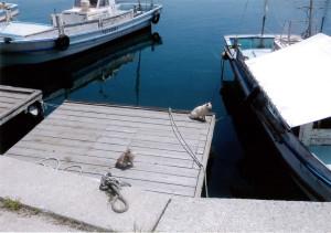 魚は只 港には野良猫20匹に会いました